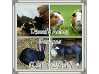 Danna's Animal Service