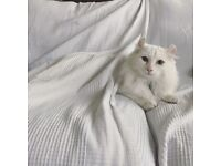 MISSING DONALD WHITE CAT - E8