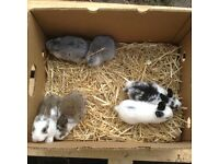 Adorable baby rabbits for sale