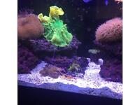 Marine tank livestock for sale