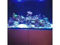 Live rock, inverts and marine fish from reef tank ***Please read***