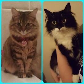 2 female cats in need of new loving forever home