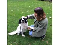 Friendly, experienced dog walker and doggy day care dog sitter! Homerton and Victoria Park area