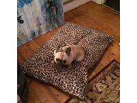 Extra Large dog bed for sale, very durable and water proof with fleece covers.
