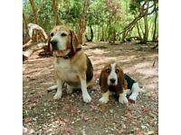 DOG DAYCARE/ BOARDING/ WALKING