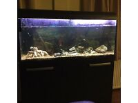 3ft Aquarium /fish tank and cabinet