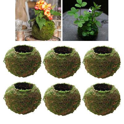 6xCreative Moss Ball Flower Pot Planter Bonsai Plant Holder Home Garden 9cm
