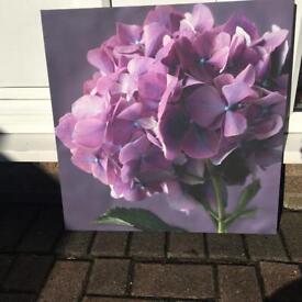 Purple hydrangea canvas from Next - 57cm x 57cm