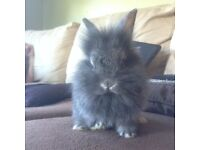 Small friendly sociable rabbit for sale, looking for responsible owner only