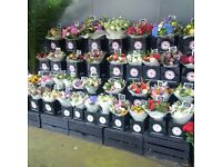 Night Shift – Flower Conditioner ASAP