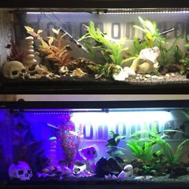Fish tank - 212L Clear seal tank with black juwel Rio 240 cabinet and all the bits