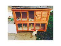 2 story rabbit hutch