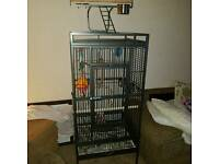parrot cage & accessories