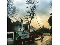 Climber or ground staff required at Greencut tree specialists