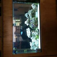 Salt water tank and accessories for sale