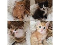 4 adorable kittens looking for a new home!