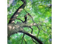 Biggs Trees, Tree surgeon