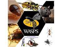 Pest Control Mice rat wasps cockroaches ants fleas flies bedbugs Extermination