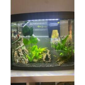 Selling Fish and Tank (MUST GO TOGETHER)