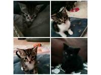 Cute and friendly kittens