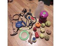 Dog equipment bundle - Best offer