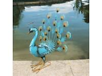 Elegant blue garden peacocks