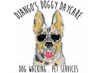Django's Doggy Daycare - Dog Walking . Group Play Sessions . Doggy Daycare