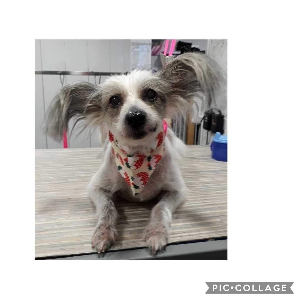 Dog Groomer In Winchburgh Mobile Throughout West Lothian