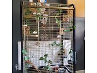 X6 Zebra Finches / X2 Birdcages (*Inc Stand) X1 Cage is a 5ft Parrot Cage !!!