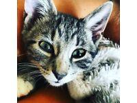 2 female cats need loving homes