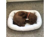 *Perfect Petzzz* Chocolate Labrador-Dog-Puppy-Bed-Carry Case-Breathing/Moving