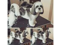 Professional mobile dog grooming service