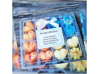 Spring scents soy wax melts