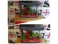 Fish tank & set up