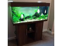 Aquarium Juwel 180l With Discus