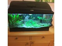 AQUARIUM 2ft by1ft plants, thermometer,pump and tropical fish