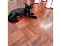 Kitten male 9 weeks old please read ad