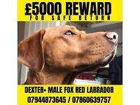 STOLEN - £5000 REWARD