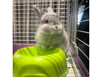 Dwarf Bunny, Cage, Food and Accessories.