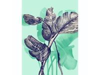 Botanical illustration A3 or A4