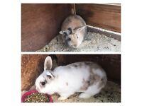 2 rabbits boy &girl