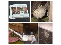 PEST CONTROL....Do you have a Wasp nest???? Removal for £40.00! Or any other pest problem??