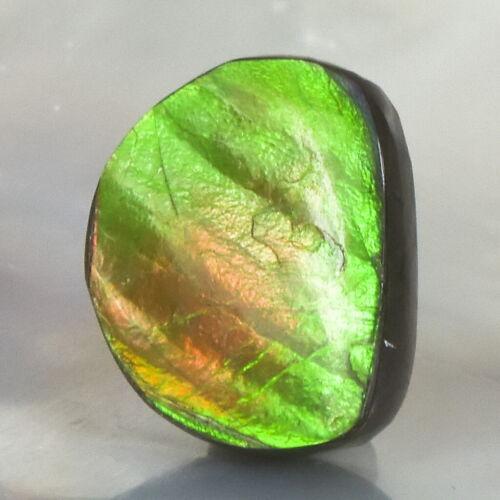 Ammolite Ammonite 2.51 g Rare Gemstone Cabochon Canada 17.90 x 14.51 x 4.55 mm