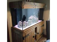 Large 4ft Long 2ft deep Fish Tank - Full Set up