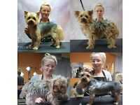 """Dog Grooming Service. Home Salon """"Happy Dogs"""" :)"""