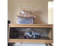 3ft vivarium - full set up with cornsnake