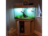 Corner fish tank with accessories