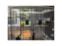 Pair of canaries + cage