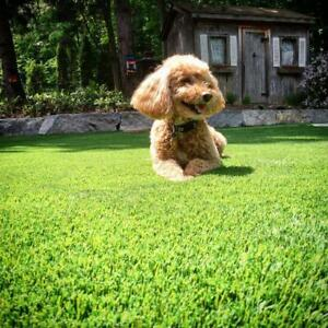 Rymar Synthetic Grass & Artificial Turf