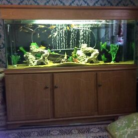 Fish aquarium for sale